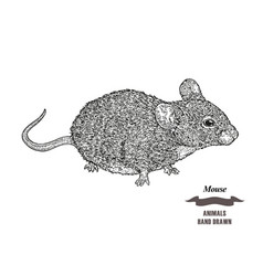 hand drawn mouse or rat animal black ink sketch vector image