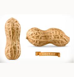 Peanut 3d realistic icon vector