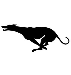 silhouette a running greyhound vector image