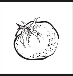 hand drawn sketch tomato vector image vector image