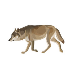 Gray wolf trotting vector