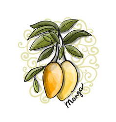Mango sketch for your design vector