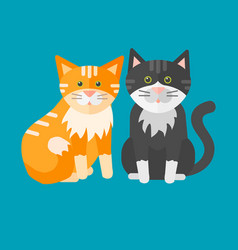 portrait cat animal pet cute kitten purebred vector image