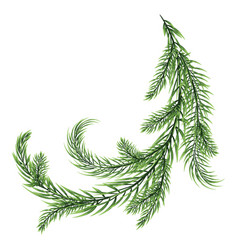 Fir branch isolated on white background vector