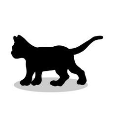 kitten cat pet black silhouette animal vector image