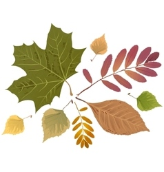 Set of autumn leaves Rowan leaf maple leaf vector