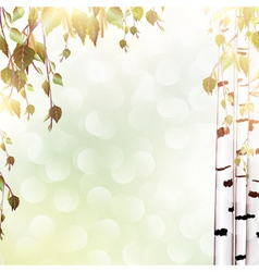 summer background with birch vector image
