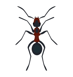 Ant nsect flat vector image