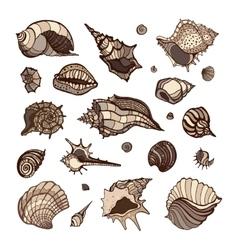 Collection of seashells vector
