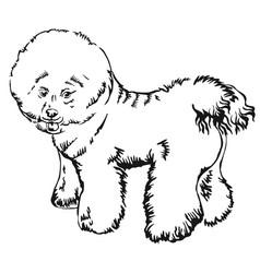 Decorative standing portrait of dog bichon frise vector