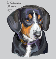 entlebucher mountain dog colorful hand drawing vector image