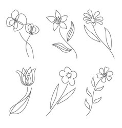 flowers in line style modern line art for poster vector image