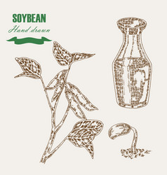 hand drawn soy plant soybean and soy oil in glass vector image