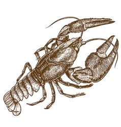 engraving crayfish vector image vector image