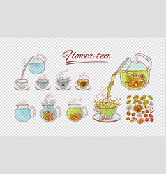 Herbal flowers tea constructor brew process vector