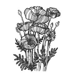 Poppy flower engraving vector