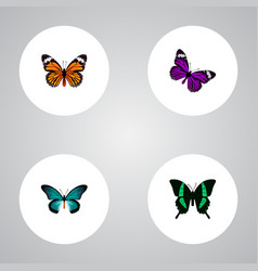 Realistic monarch butterfly pipevine and other vector