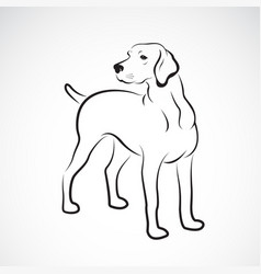 labrador dog on white background pet animals easy vector image