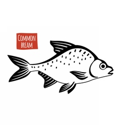 Common Bream black and white vector image vector image