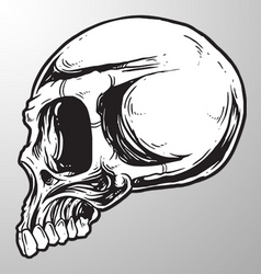 skull sketch design element vector image
