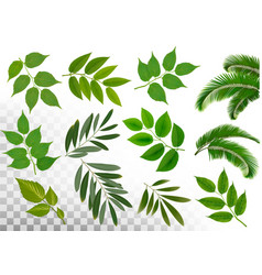 big collection of braches with leaves on vector image