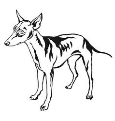 Decorative standing portrait of dog cirneco dell vector