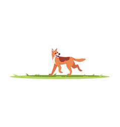 Dog play outside semi flat rgb color vector