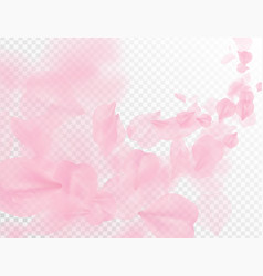 sakura petal flying background pink flower vector image
