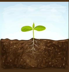 Vegetable seedlings growth in fertile ground on vector