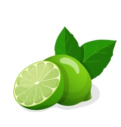 fresh limes vector image vector image