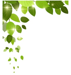 beauty white background with leaves for you design vector image vector image