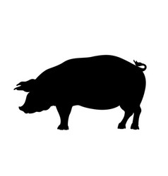 black silhouette pig isolated image vector image