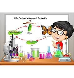 Boy presenting life cycle of butterfly vector