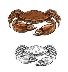 crab sea animal seafood shellfish sketch vector image