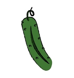 Drawing cucumber nutrition vegetable icon vector