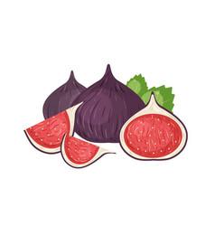 Fresh figs realistic vector