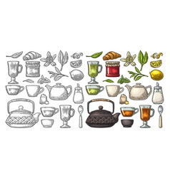 set tea color vintage engraving isolated vector image