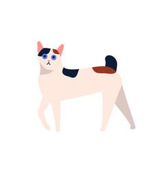 cartoon japanese bobtail cat breed flat vector image