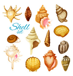 Cartoon seashell and sea mollusk animals vector