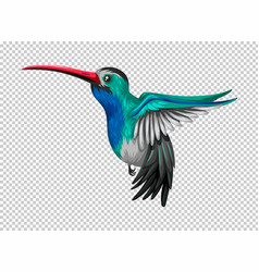 Hummingbird flying on transparent background vector
