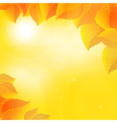 Autumn leaves on a sunny sky background vector image