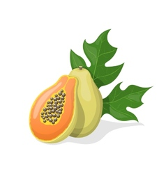 Papaya on white background vector image