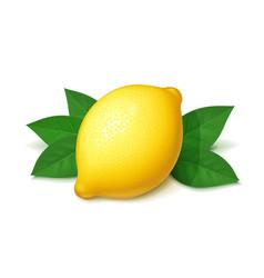 ripe juicy lemon with green vector image