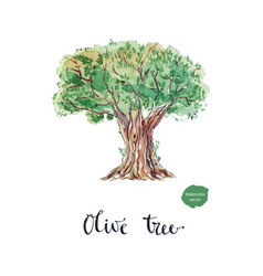 An old bountiful olive tree extracted vector