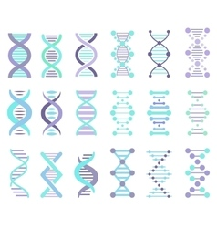DNA Strands Set vector image