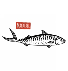 Mackerel black and white vector image vector image