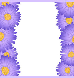 purple aster daisy flower border vector image
