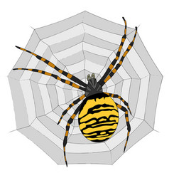Big spider on the web vector