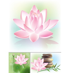 Lotus vector image