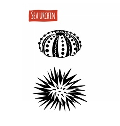 Sea Urchin black and white vector image vector image